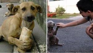 Un niño estaba dando de comer a un perro callejero. ¡Cuando un señor mayor lo vi
