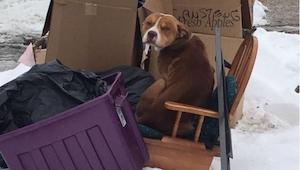 ¡Lo que un perro abandonado y medio muerto de hambre hizo al ver algo de comer,