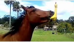 Le regalaron un juguete de goma. ¡La reacción del caballo en el segundo 00:17 es