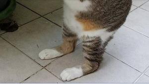 ¡Pensaba que encontró a un gatito callejero de toda la vida, pero cuando lo leva
