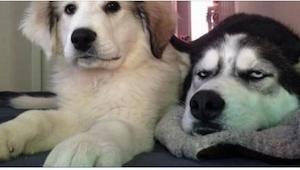 ¡Estos 12 perros fueron capturados en el mejor momento! Sus miradas lo dicen tod