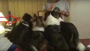 ¡Lo que hace el primer perro de la izquierda, es lo más descarado, pero también