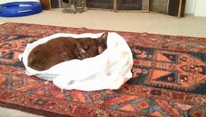 Antes de enterrar a su gato, le dejó en el salón y sacó una cámara. No pudo cont