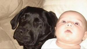 Su propia hermana le advirtió que no comprara un perro cuando tuviera un bebé. 1