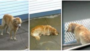 ¡Nadie se atrevía a ayudar a este perro maltratado por sus dueños, pero luego se