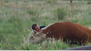 Este hombre se tumbó al lado de una vaca. Cuando ya sepáis por qué, os conmoveré