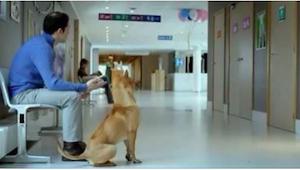 Este perro y su dueño esperan tranquilamente delante del paritorio. ¡Esto os sor
