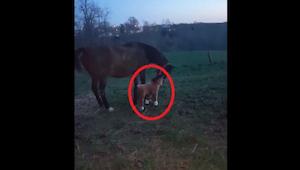 ¡La reacción de este caballo al ver a un potro de peluche os hará llorar de la r