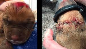 ¡Un cachorro de 3 días vuelve en sí gracias al sacrificio de las enfermeras que
