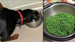 ¡Los 9 productos más saludables que no los das a tu perro y deberías!