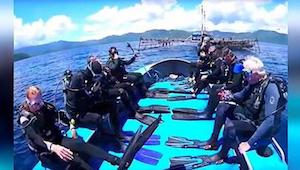 Los tiburones fueron atrapados en redes de pesca. Los 8 buzos más valientes les