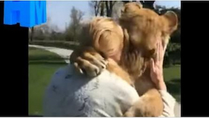 Esta mujer cuidaba a dos leonas, pero luego tuvo que dejarlas en el zoo. Lo como