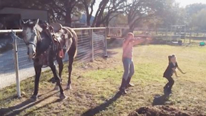 Dos niñas empiezan a bailar, pero fíjaos en su caballo. ¡Opacó a ambas chiquilla