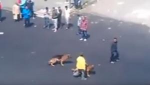 Este hombre tiró un ladrillo a un perro... ¡Por suerte el karma siempre vuelve y