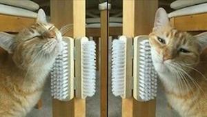 ¿Tu gato se aburre como una ostra? ¡Pues estos 9 trucos son para tí!