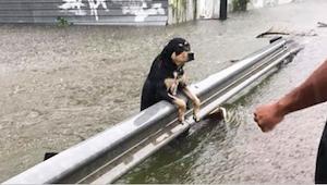 Durante una tremenda tormenta muchos dueños dejaron a sus perros para que murier