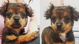 En la clínica veterinaria iban a dar una inyección letal a esta cachorra. Cuando