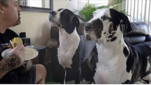 Cuando este dueño explicó a sus perros que ellos ya habían comido y ahora le toc