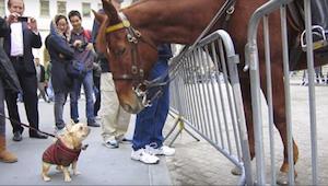 ¡El perrito se volvió loco de alegría cuando el caballo le prestó atención!: ¡te