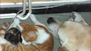 Cuando su gata parió, este perro entró en acción... ¡Nadie lo esperaba!