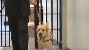 Un soldado entra con su perro en la cárcel. ¡Mirad la reacción del perro al ver