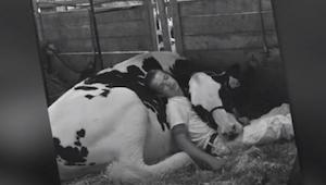 Desde cuando era pequeño se cría con esta vaca. ¡La foto que muestra los lazos m